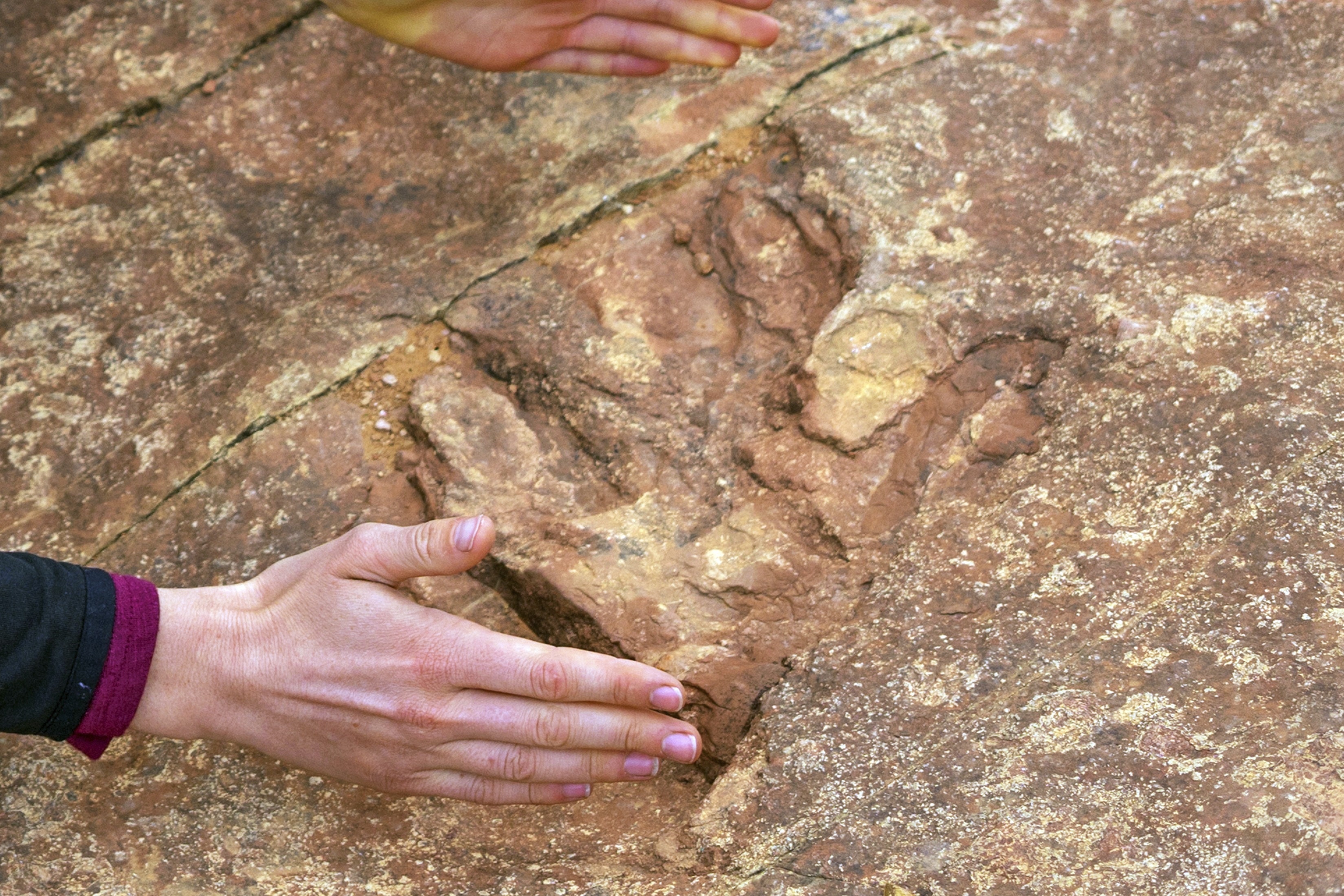 Why Are Tourists in Utah Throwing Dino Footprints Into a Lake?