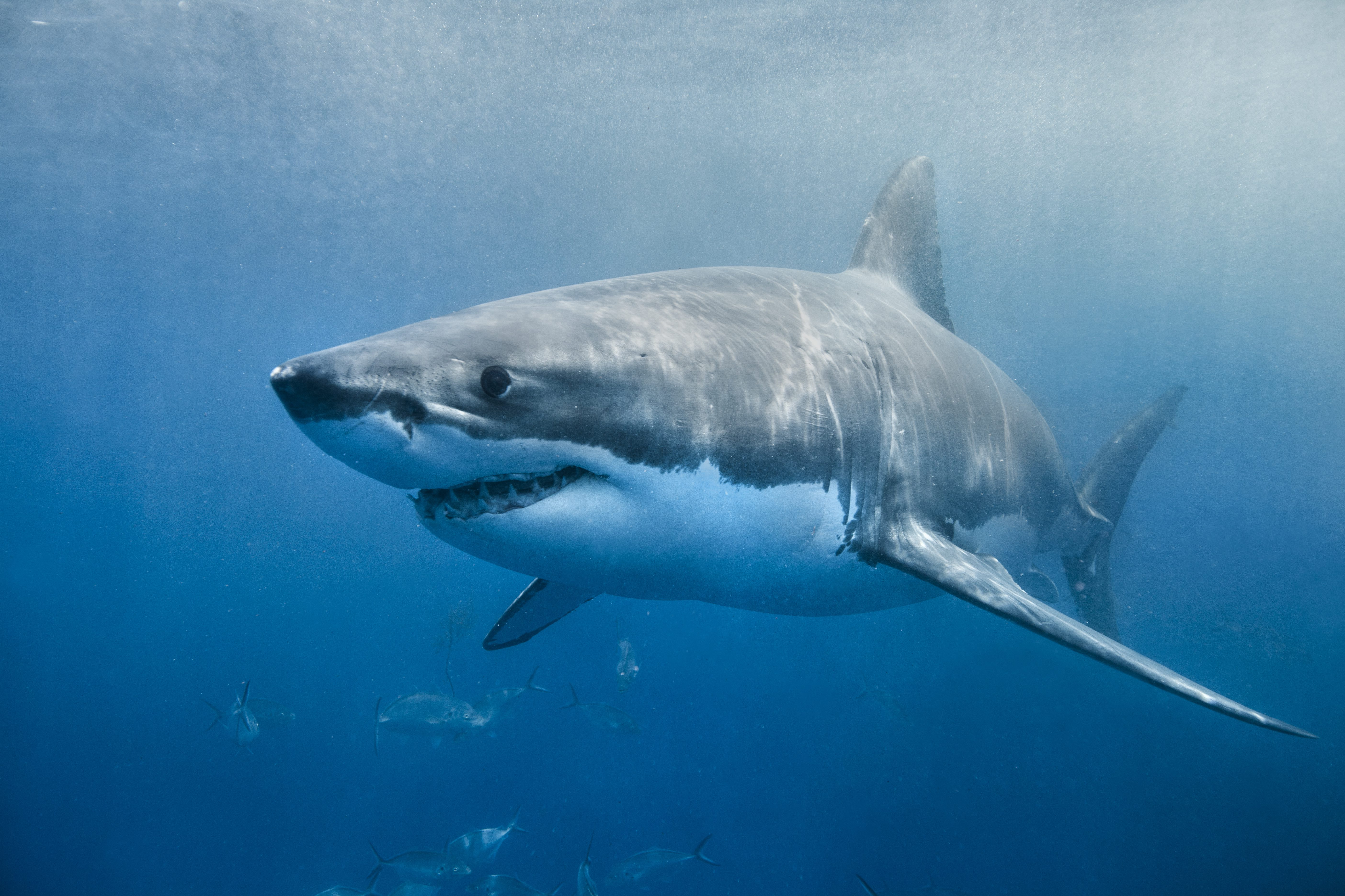 """The Real-Life """"Jaws"""" That Terrorized the Jersey Shore"""