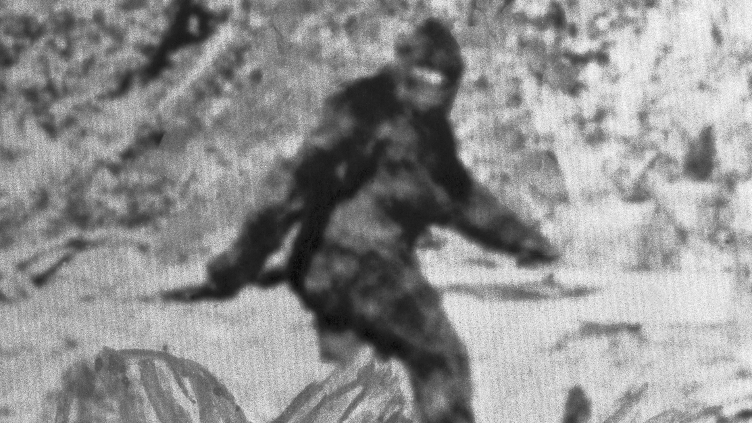The mythical Bigfoot