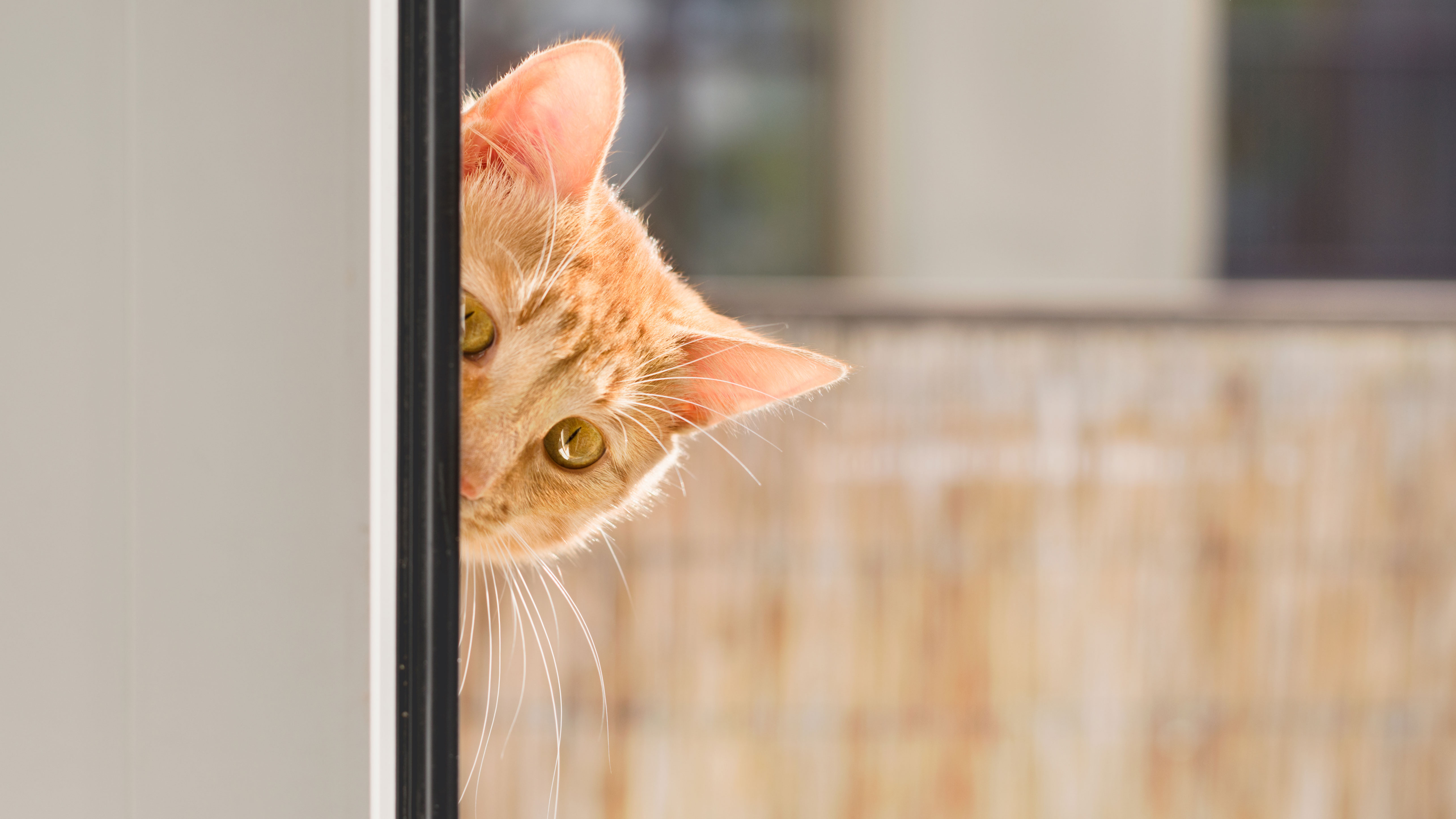 When the CIA Learned Cats Make Bad Spies - HISTORY