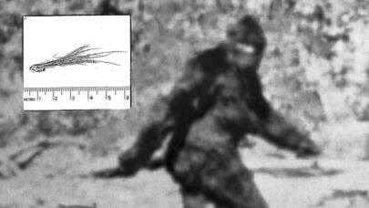 Read More: Bigfoot Was Investigated by the FBI