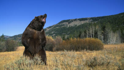 5 of History's Deadliest Bear Attacks