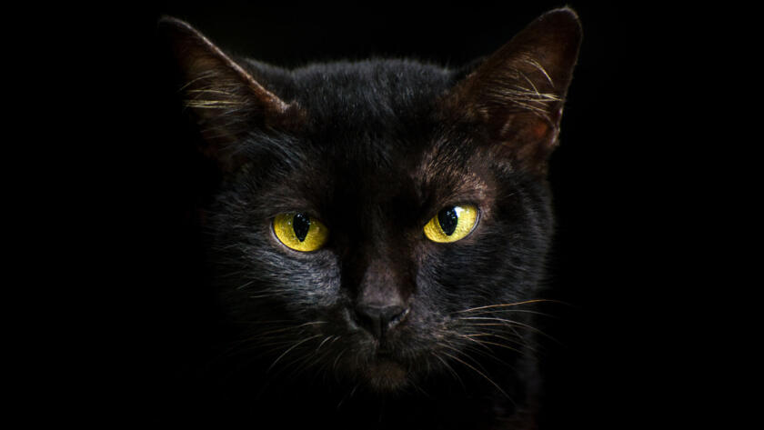 Why Black Cats Are Associated With Halloween and Bad Luck Alt Image