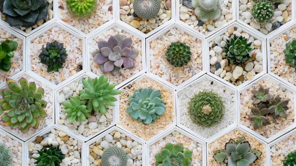 Tiny House Tinier Plants