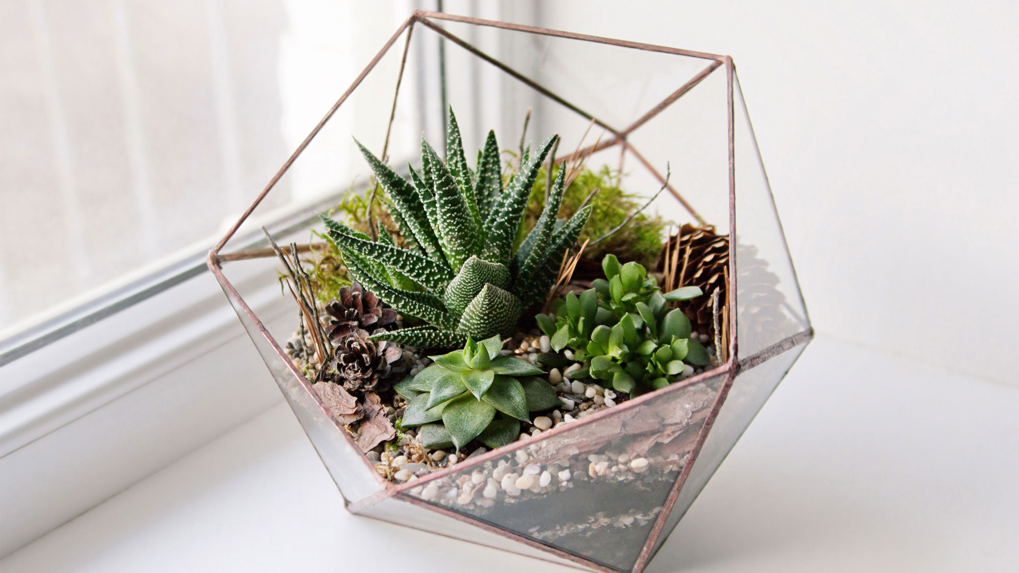 Succulents: 5 Reasons You Need These Tiny Plants in Your Small Space