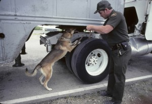 BELGIAN MALINOIS DOG USED BY U.S. BORDER PATROL TO DETECT DRUGS & ILLEGAL ALIENS.