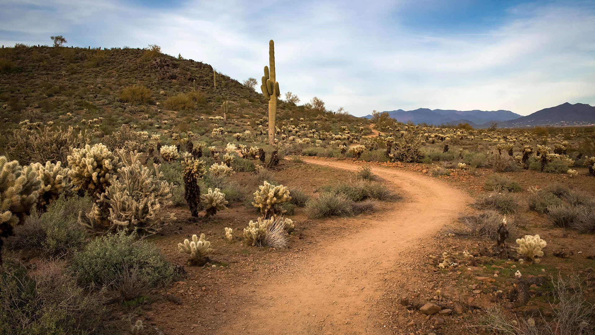 The Ocotillo Trail leads off into the Arizona desert.