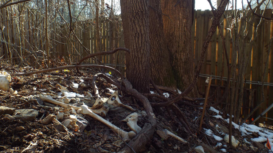 skeleton at the FOREST body farm