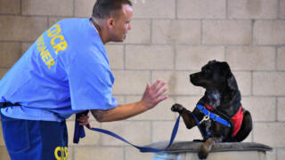 Dogs Behind Bars: What Inmates Get From Training Service Animals