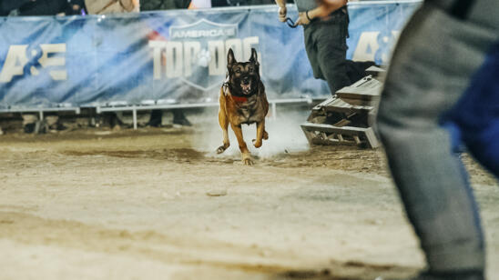 "A&E's ""America's Top Dog"" Brings Together Top Police K9s and Civilian Dogs to Compete Nose-to-Nose on the Ultimate K9 Obstacle Course"
