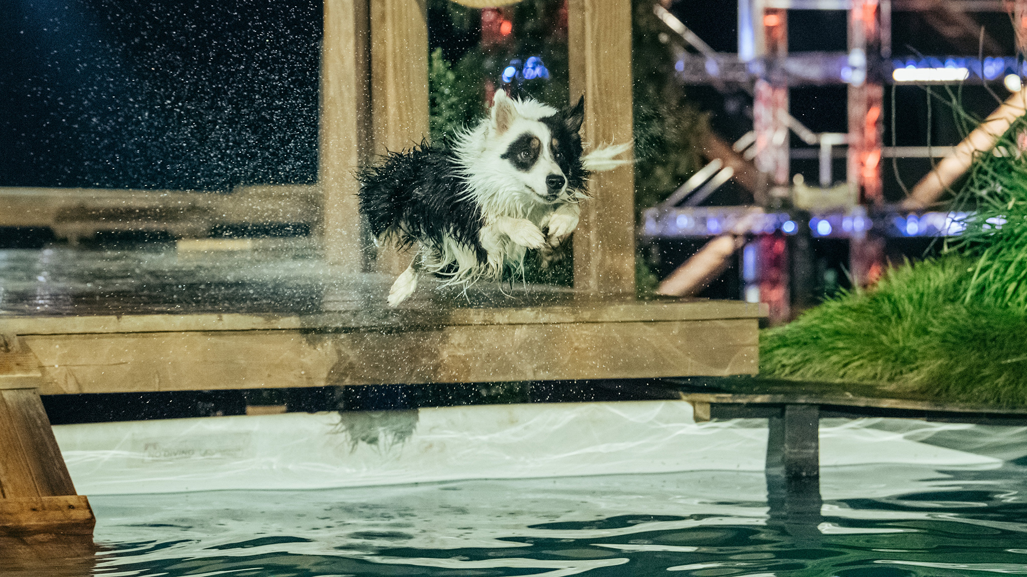 A furry participant takes a flying leap into the Splashdown pool