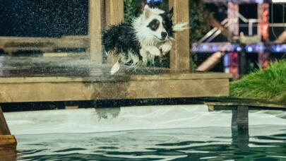 America's Top Dog: The Top 5 Toughest Obstacles