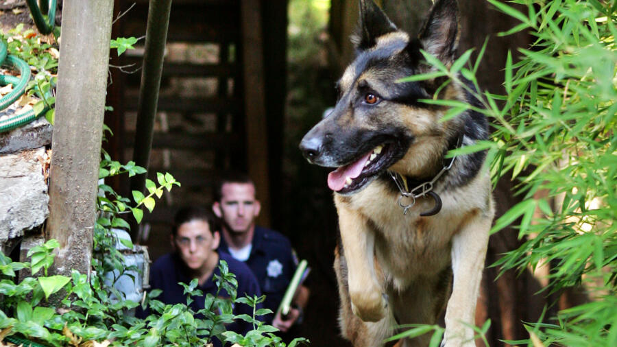 Officer and rescue volunteer with a cadaver dog
