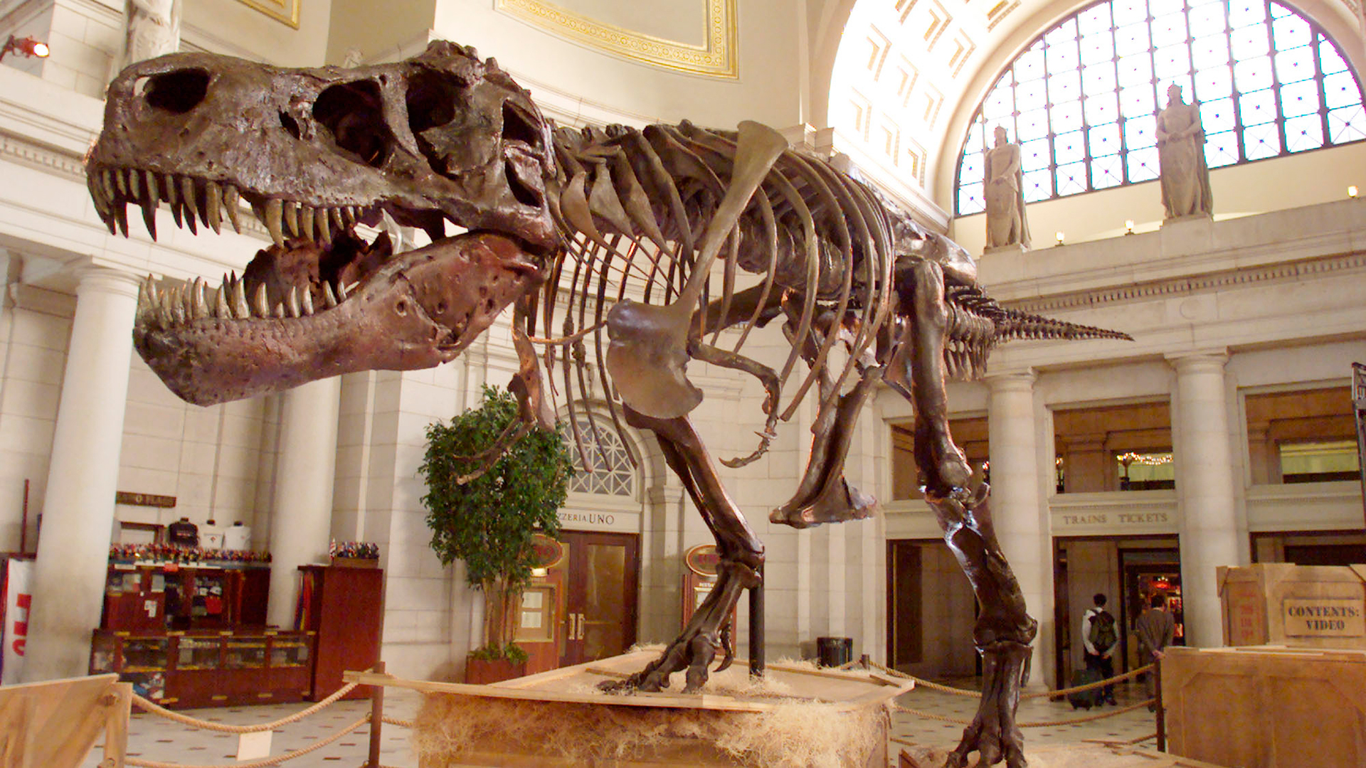 August 12, 1990: Susan Hendrickson Discovered the Largest and Most Complete Tyrannosaurus Rex Skeleton