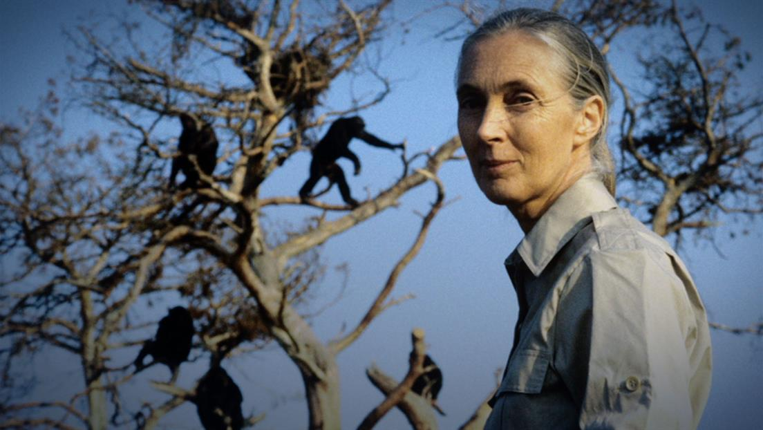 Kristin Davis on Jane Goodall