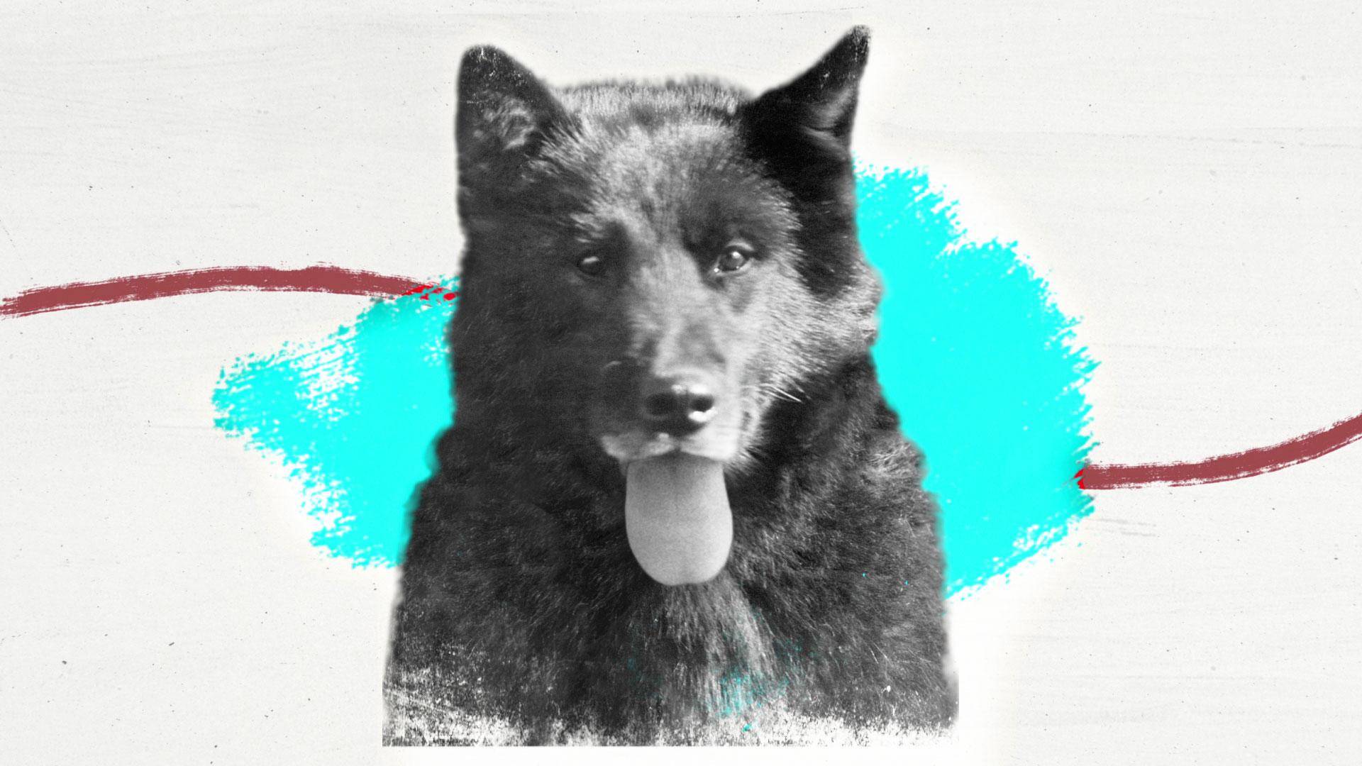 Biography: Balto the Sled Dog