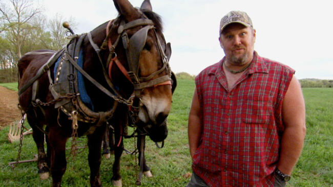 Larry Breeds Mules