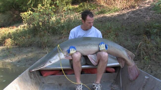 Gigantic Killer Fish II