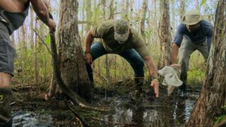The Everglades Triangle