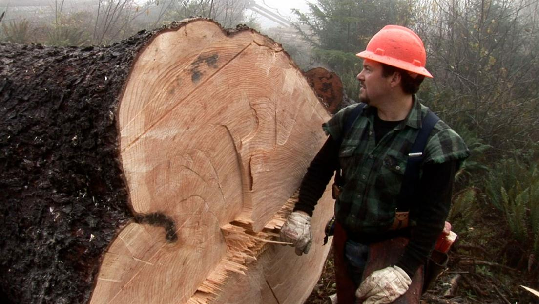 Loggers Under Fire