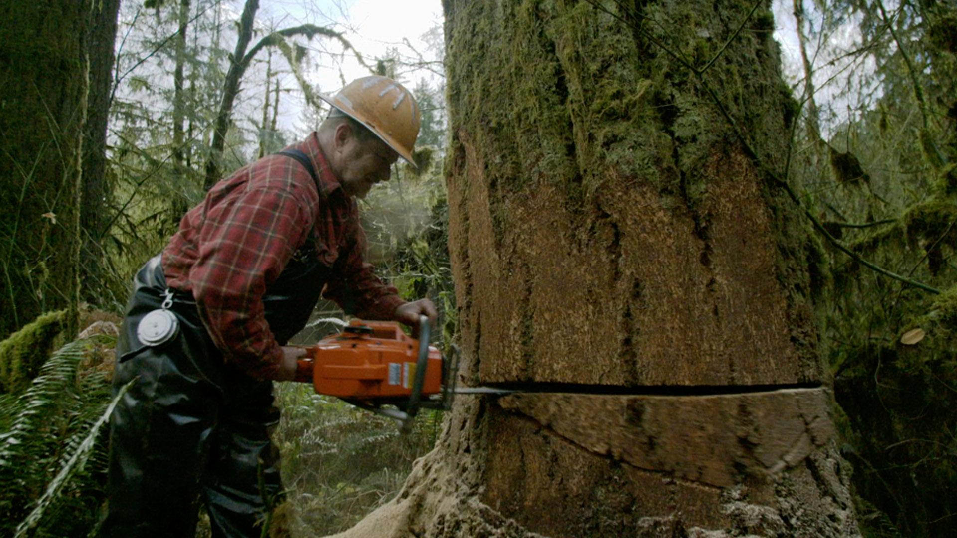 Ax Men : Snappin' Trees