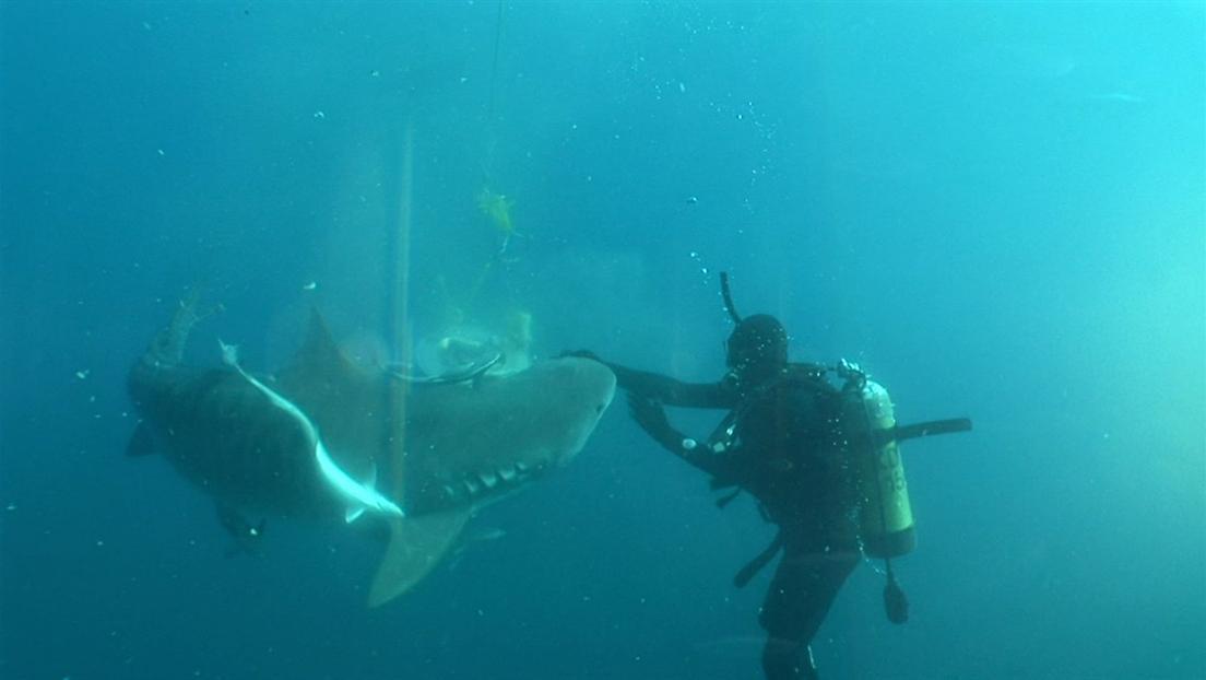 Shark Master