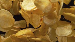 Chip Dynasties